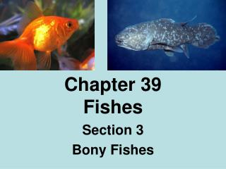 Chapter 39 Fishes