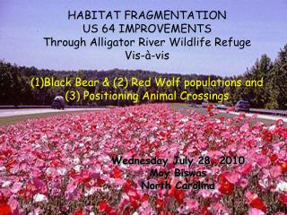 HABITAT FRAGMENTATION US 64 IMPROVEMENTS Through Alligator River Wildlife Refuge Vis-à-vis  Black Bear & (2) Red Wolf p