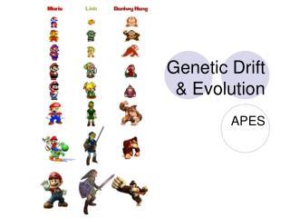Genetic Drift & Evolution