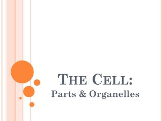 The Cell: