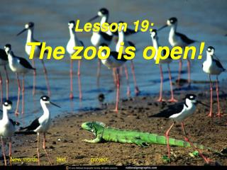 Lesson 19: The zoo is open!