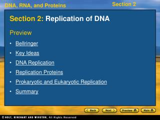 Section 2:  Replication of DNA