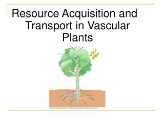 Resource Acquisition and Transport in Vascular Plants