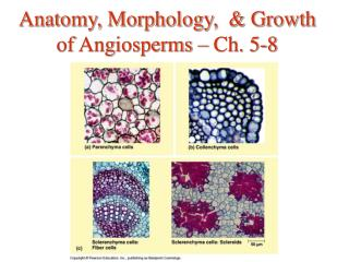 Anatomy, Morphology,  & Growth of Angiosperms – Ch. 5-8