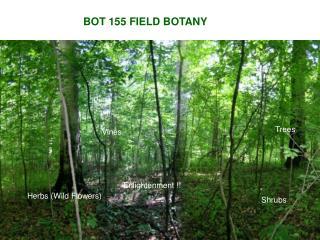 BOT 155 FIELD BOTANY