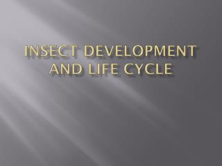 Insect development and life cycle