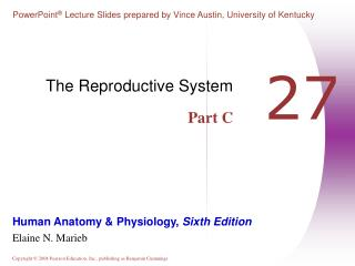 The Reproductive System Part C