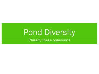 Pond Diversity