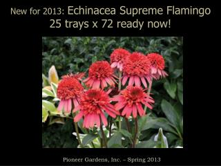 New for 2013:  Echinacea Supreme Flamingo 25 trays x 72 ready now!