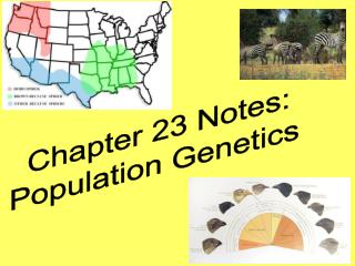 Chapter 23 Notes: Population Genetics