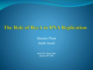 The Role of  RecA  in DNA  Replication
