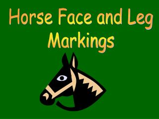 Horse Face and Leg Markings