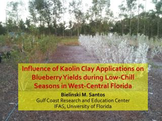 Influence of Kaolin Clay Applications on Blueberry Yields during Low-Chill Seasons in West-Central Florida
