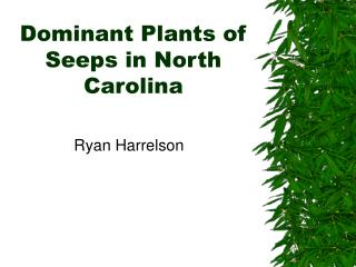 Dominant Plants of Seeps in North Carolina