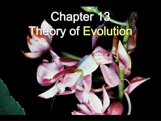 Chapter 13  Theory of  Evolution