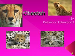 By Rebecca  Edewaard