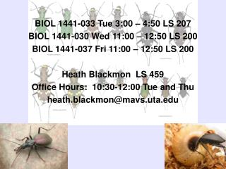 BIOL 1441-033 Tue 3:00 – 4:50 LS 207 BIOL 1441-030 Wed 11:00 – 12:50 LS 200 BIOL 1441-037 Fri 11:00 – 12:50 LS 200 Heat