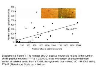 Supplemental Figure 1. The number of MC1-positive neurons is related to the number