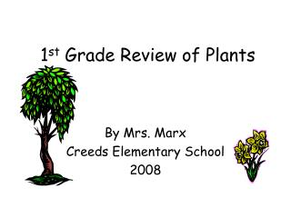 1 st  Grade Review of Plants