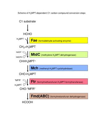 C1 substrate