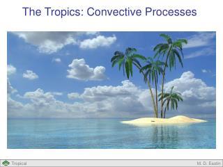 The Tropics: Convective Processes