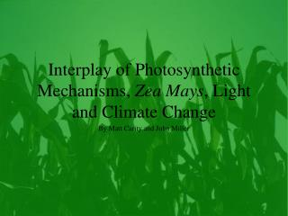 Interplay of Photosynthetic Mechanisms,  Zea Mays , Light and Climate Change