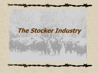 The Stocker Industry