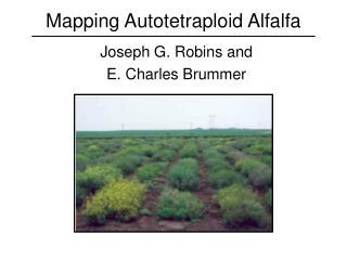 Mapping Autotetraploid Alfalfa
