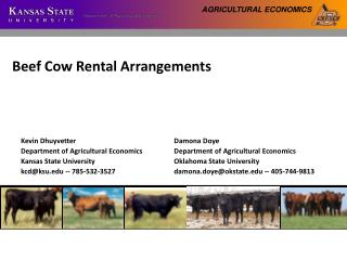 Beef Cow Rental Arrangements