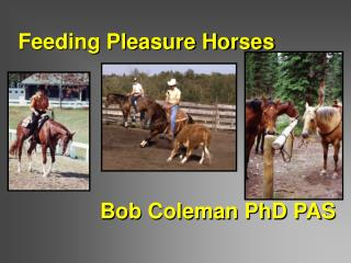 Feeding Pleasure Horses