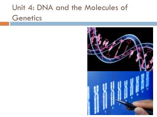 Unit 4: DNA and the Molecules of Genetics