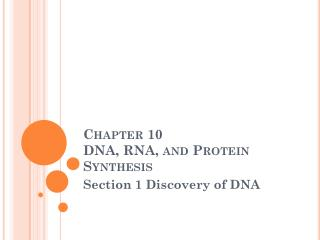 Chapter 10 DNA, RNA, and Protein Synthesis