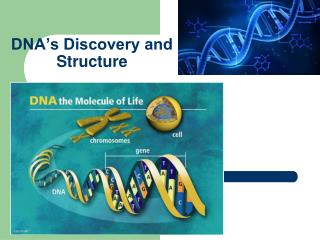 DNA�s Discovery and Structure