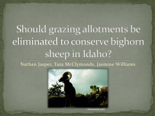 Should grazing allotments be eliminated to conserve bighorn sheep in Idaho?
