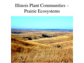 Illinois Plant Communities    Prairie Ecosystems
