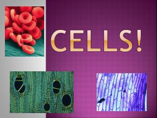 CELLS!