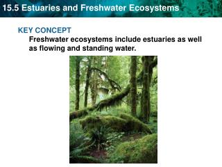 KEY CONCEPT  Freshwater ecosystems include estuaries as well as flowing and standing water.