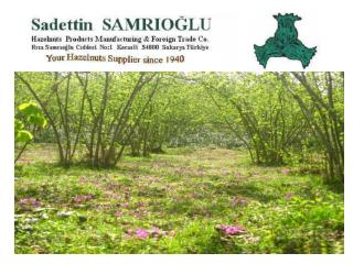 Welcome to SAMRIOĞLU HAZELNUTS, DRIED FRUITS & CHESTNUTS EXPORT  TO  THE  WHOLE WORLD