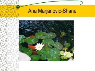 Ana Marjanović -Shane