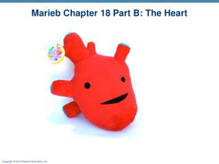 Marieb Chapter 18 Part B: The Heart