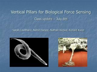 Vertical Pillars for Biological Force Sensing