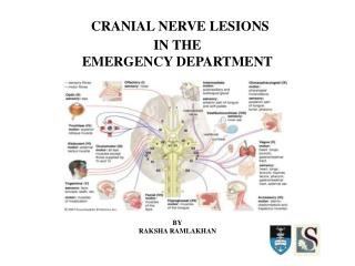 CRANIAL  NERVE  LESIONS  IN THE  EMERGENCY DEPARTMENT BY RAKSHA RAMLAKHAN