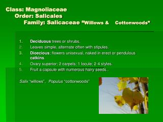 "Class: Magnoliaceae      Order: Salicales           Family: Salicaceae "" Willows &    Cottonwoods"""