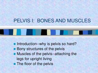 PELVIS I:  BONES AND MUSCLES