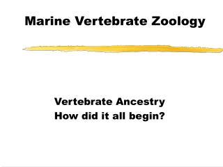 Marine Vertebrate Zoology