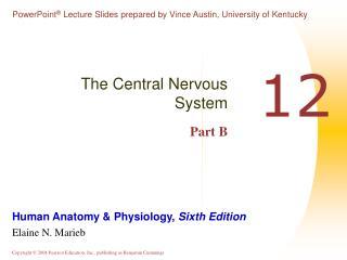 The Central Nervous System Part B
