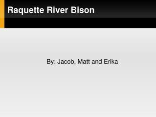Raquette River Bison