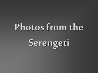 Photos from the Serengeti