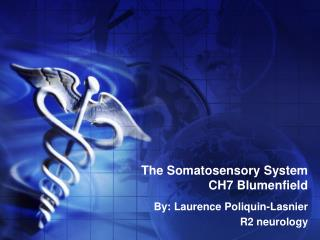 The  Somatosensory  System CH7  Blumenfield