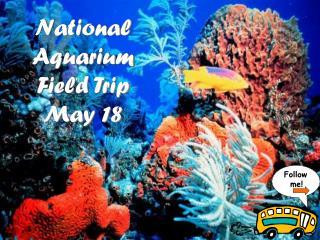 National Aquarium Field Trip May 18